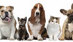 Post image for Is Your Home A Danger To Your Pets???