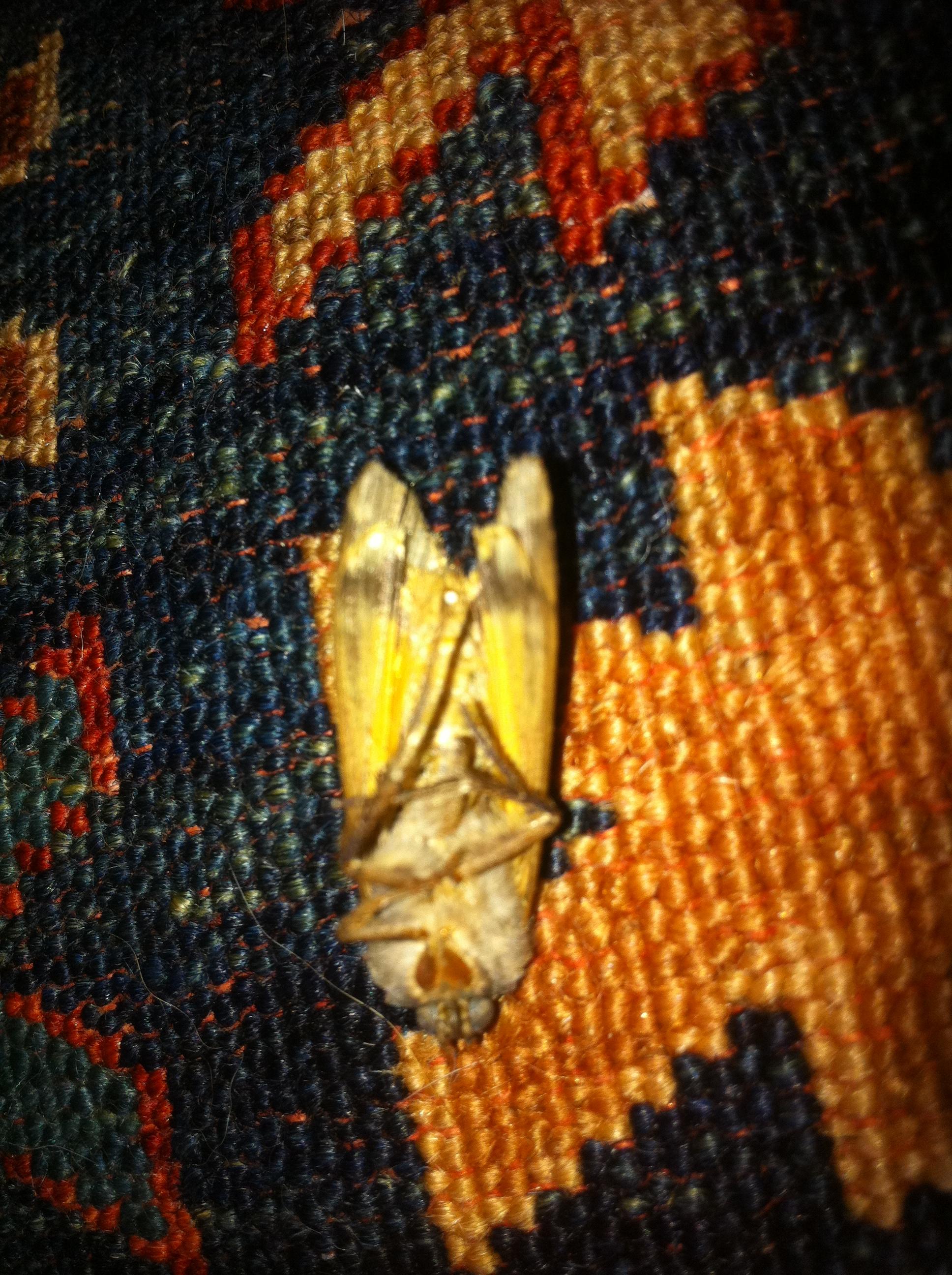 Moth Damage Orientel Rug Boston